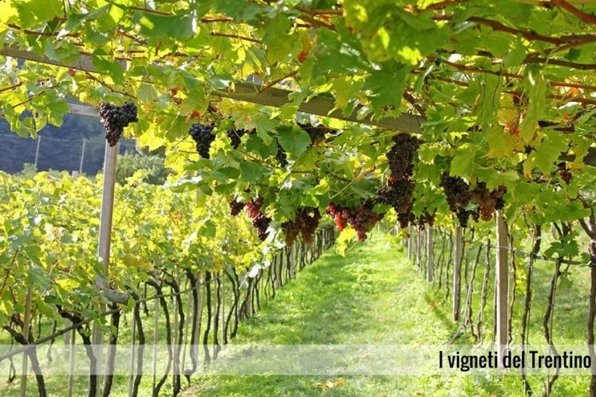 Enjoy33 Tour del Vino, dal Trentodoc al Teroldego | 1 giorno