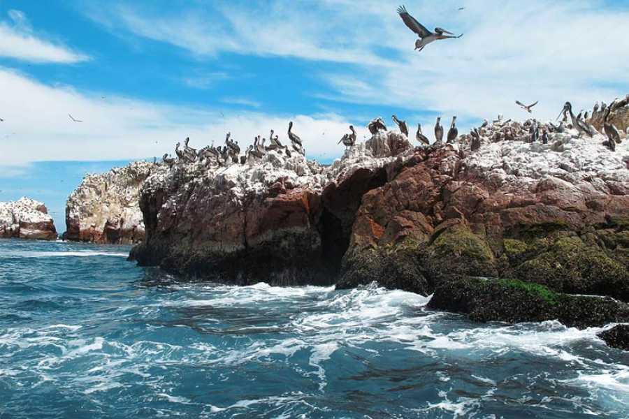 mystic lands peru ISLAS BALLESTAS + CIUDAD DE ICA