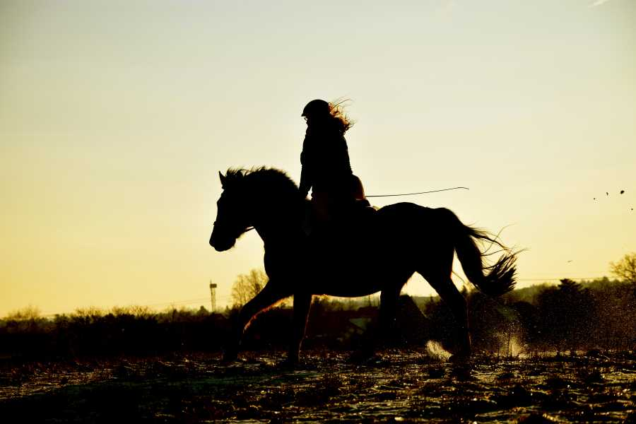 CongoCanopy.com ATV Horseback Combo