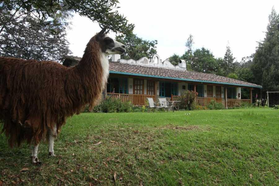 Viajando por Ecuador HACIENDA PALMERAS INN