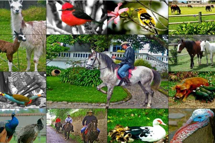 Viajando por Ecuador HACIENDA CUSIN