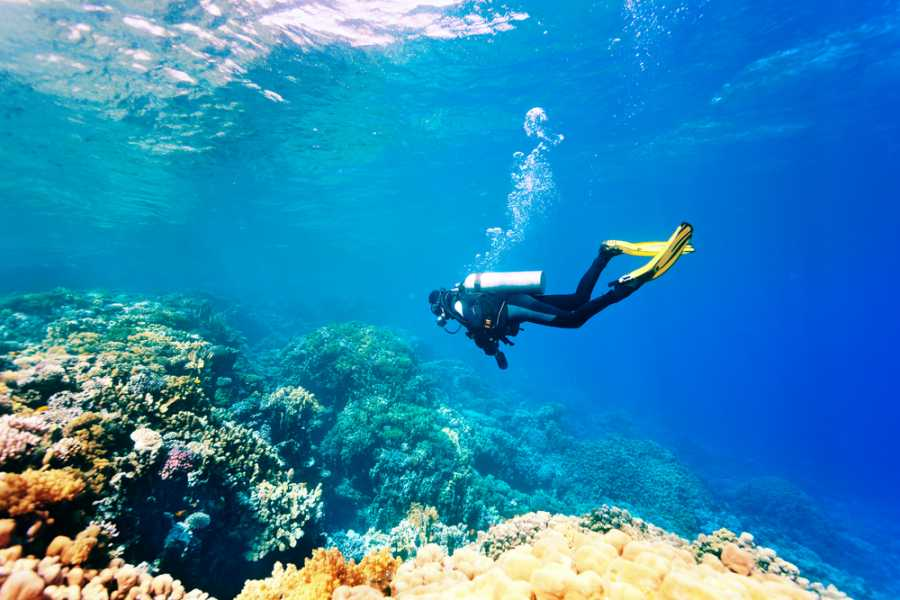 snorkeling and scuba diving essay Scuba diving essaysscuba is an acronym for self-contained underwater breathing apparatus with this apparatus, one can experience the freedom to discover and enjoy all the great qualities of the ocean.