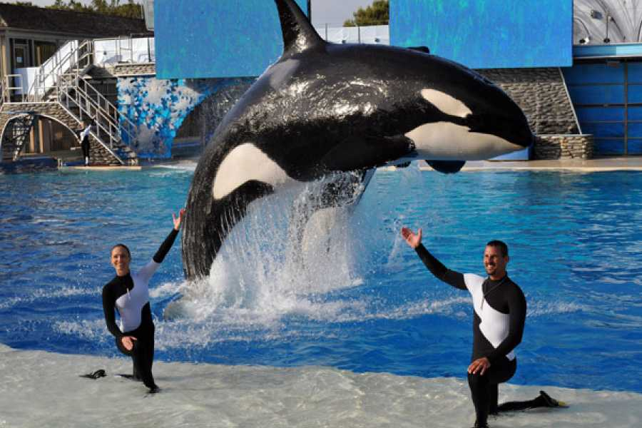 Dream Vacation Builders (SW2) SeaWorld San Diego Single Day with All Day Dining + Round Trip Transfer