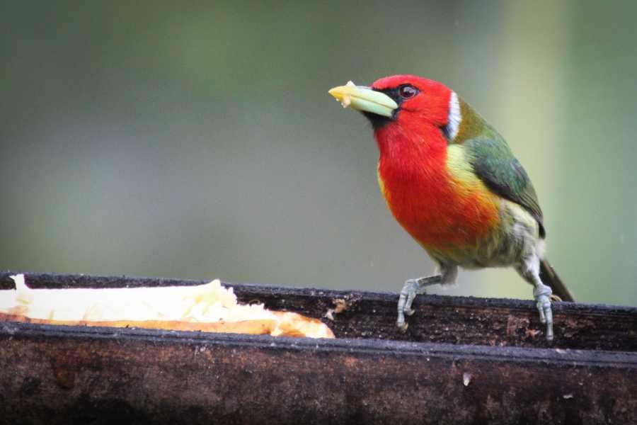 Andes Ecotours Quininí Nature Reserve Birds & Butterflies