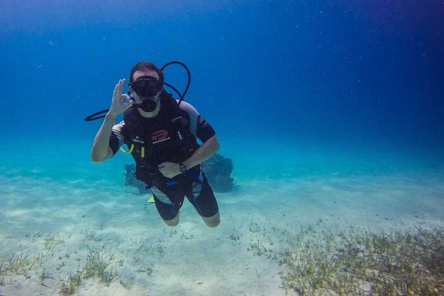 Marina Blue Haiti Scuba Diving Charter Plus