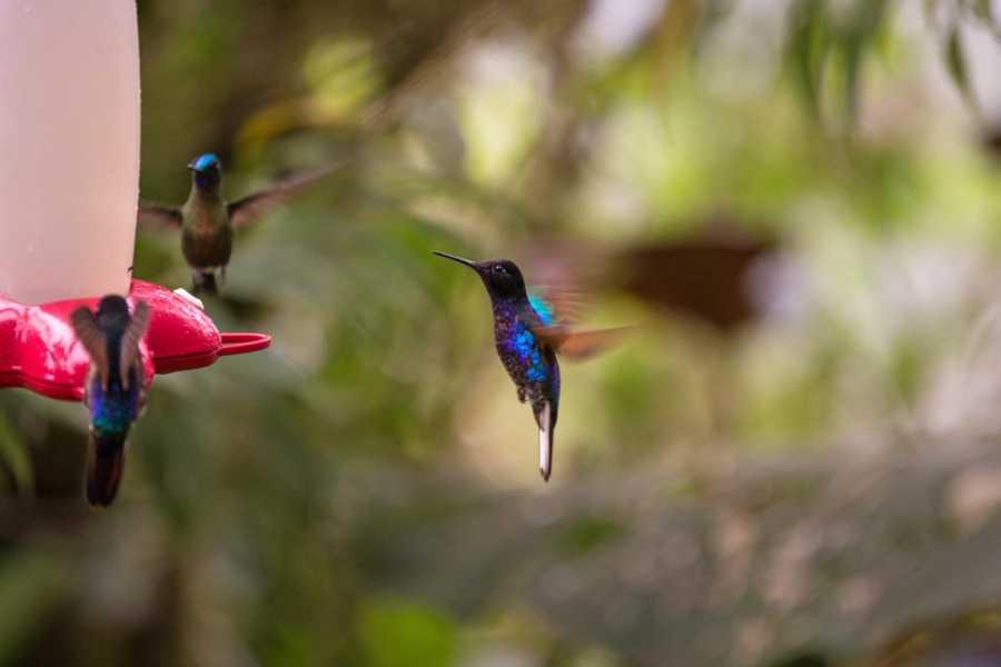 Viajando por Ecuador MASHPI LODGE