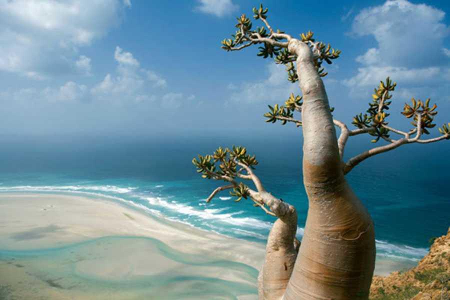 Explorabilia Socotra and Somaliland Arabian Sea Combo