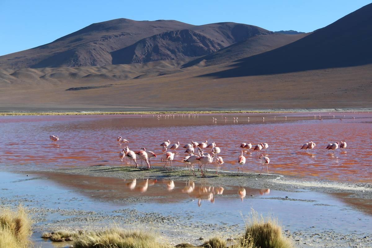 Late Bolivia TOUR CLÁSICO: Salar de Uyuni, Desiertos y Lagunas de Colores