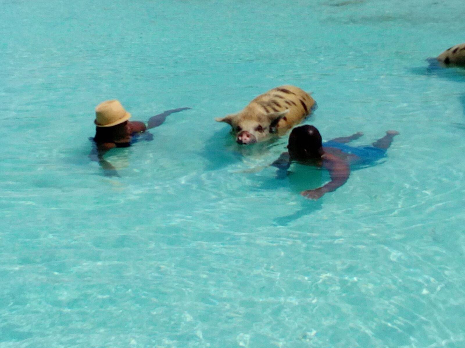 Exuma - George Town/Swimming Pigs Staniel Cay: Full Day