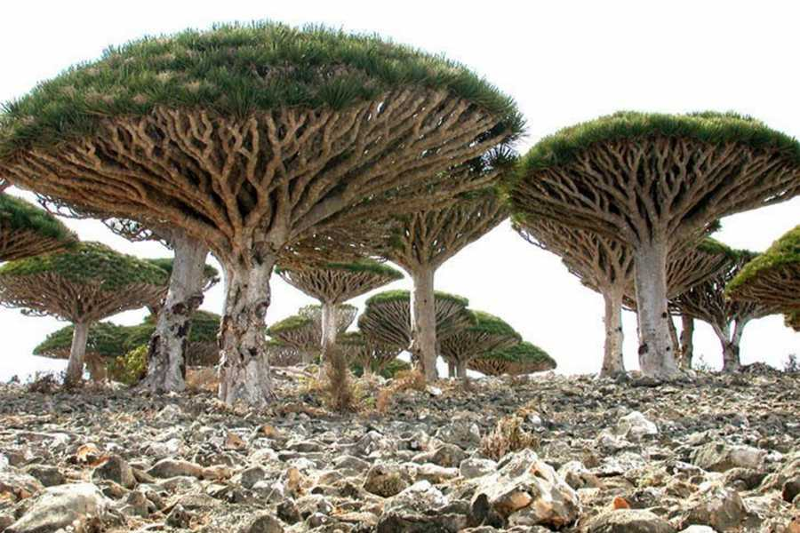 Explorabilia Socotra Arabian Sea Tour