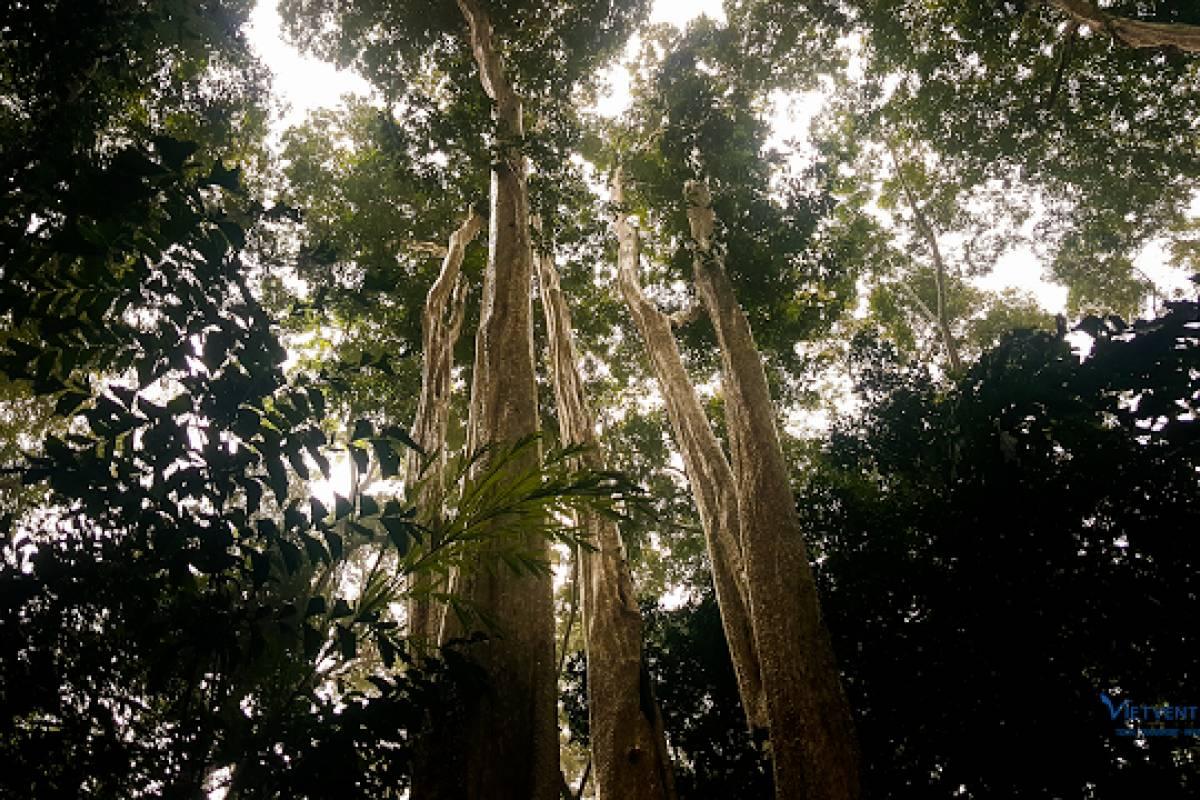 Viet Ventures Co., Ltd Tour trải nghiệm rừng Nam Cát Tiên 1 ngày
