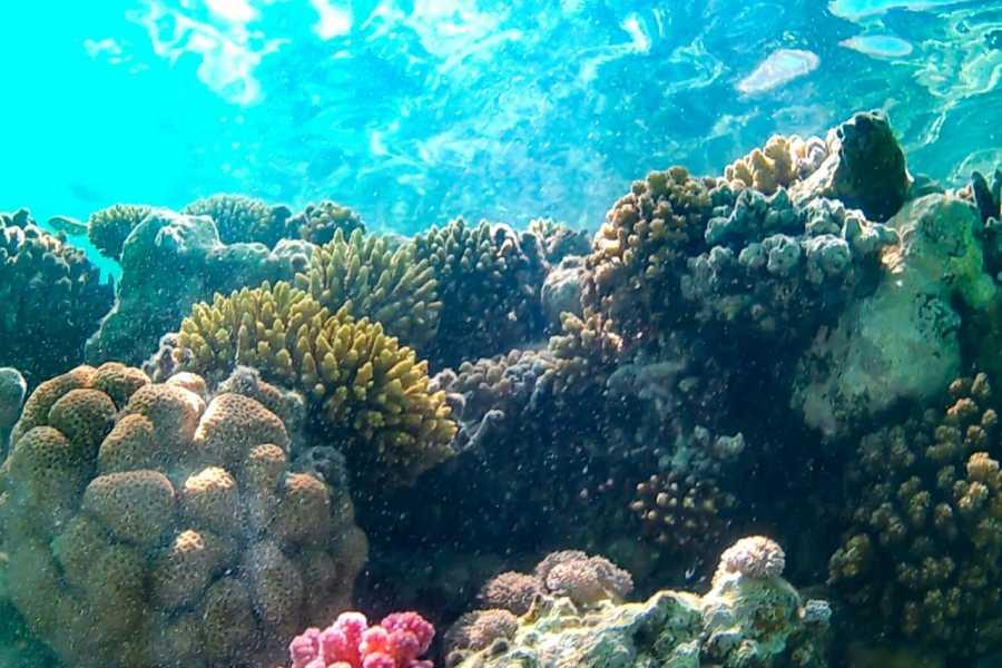 Marsa alam tours Abu Dabbab Dugong Snorkelling Trip from  Hurghada