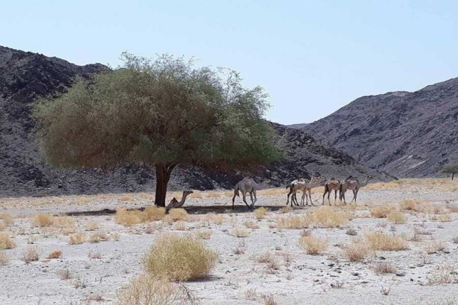 Marsa alam tours Wadi El Gemal Trip from Marsa Alam