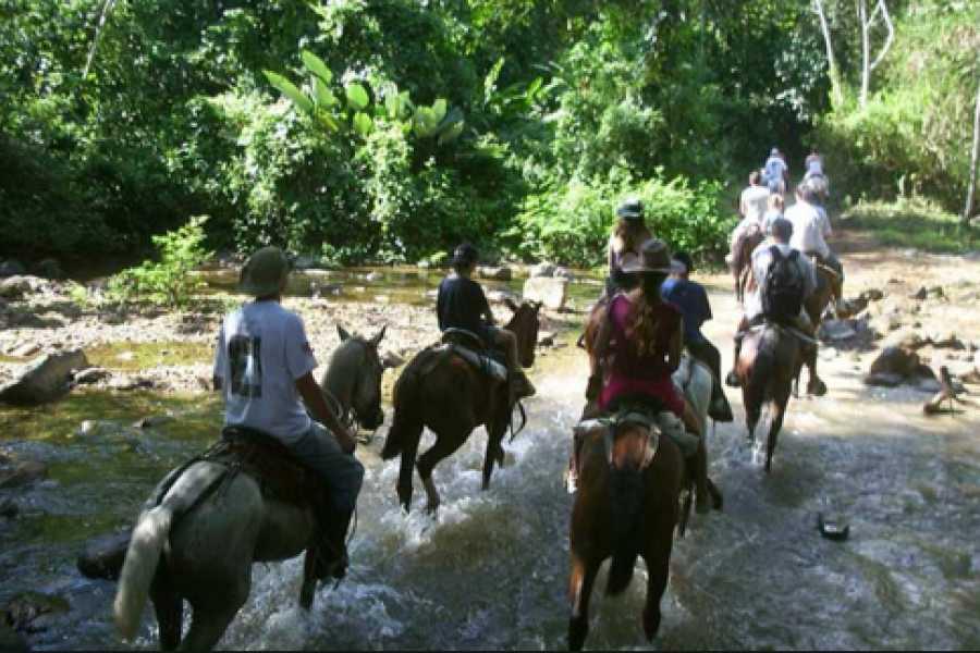 Pura Vida Casas Adventures NAUYACA FALLS Horseback Riding