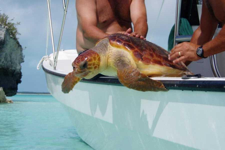 TheRealBahamas LLC Exuma - George Town: Sandbar Snorkel Safari: Off Island Boat Tours
