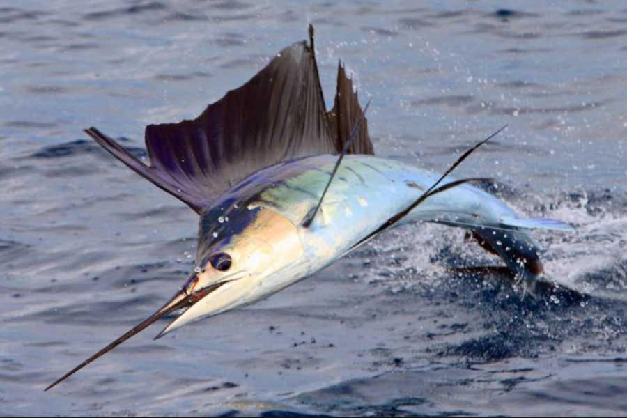 Pura Vida Casas Adventures SPORT FISHING