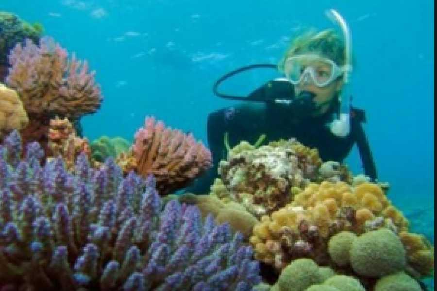 Pura Vida Casas Adventures TORTUGA ISLAND: BOAT TOUR SCUBA or SNORKEL