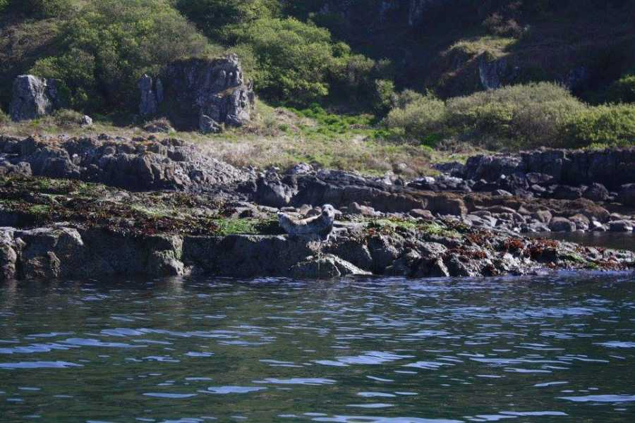Maybe Sailing Southern Ireland Explorer
