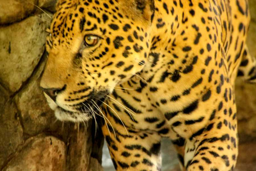 Tour Guanacaste Diamante Animal Sanctuary Pass