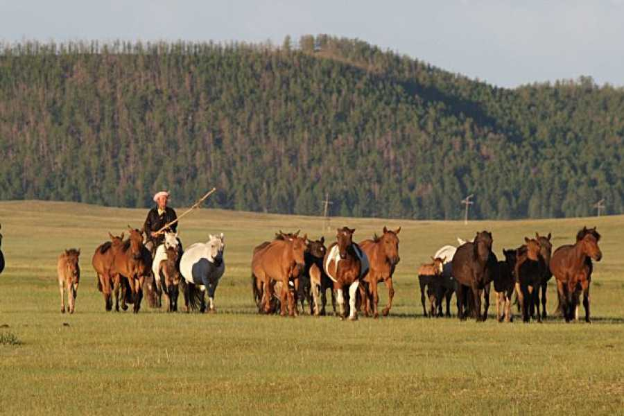 The Great Mongolian Adventures Khangain Nuruu Horse Trek 16 Days