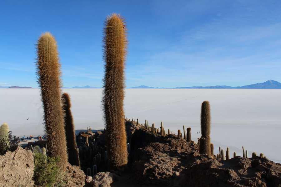 Late Bolivia Salar de Uyuni Full Day