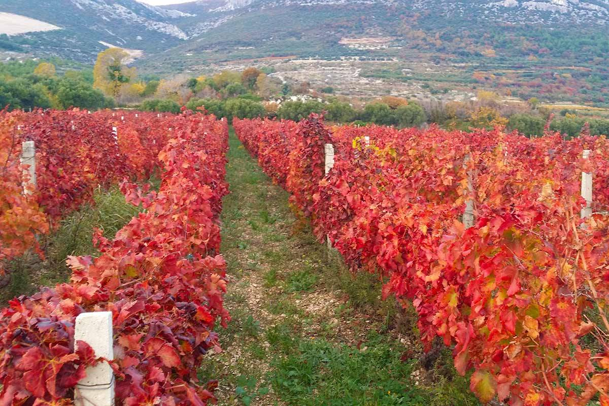 Sugaman Tours Wine Tasting Tour, Split Croatia