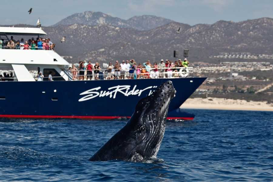 Pacifico Tours SA de CV Whale Watching Dinner & Transfer