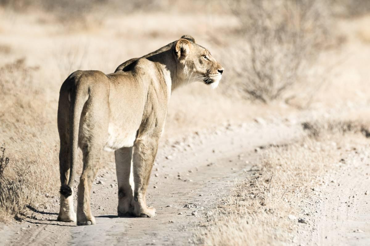 Toerboer 2018 Botswana Discovery