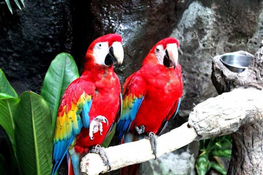 Tours & Tickets Operador Turístico PACKAGE VERACRUZ - PACKAGE 4 DAYS AND 3 NIGHTS IN VERACRUZ