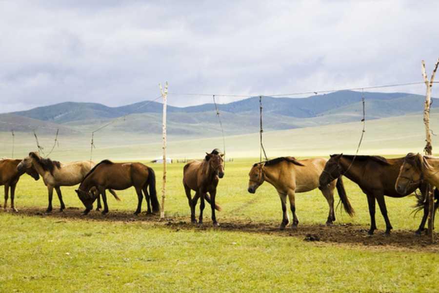 The Great Mongolian Adventures Khangain Nuruu Horse Trek 11 Days