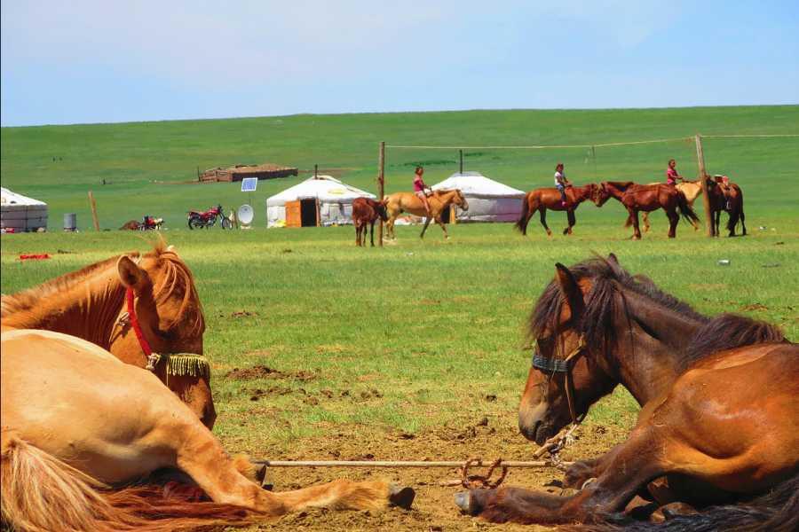 The Great Mongolian Adventures Khangain Nuruu Horse Trek 9 Days