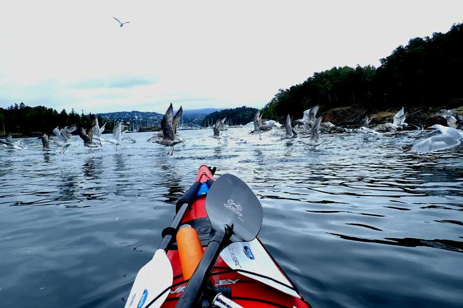 Viking Biking Kayak Tour: 2 Hours on The Oslo Fjord