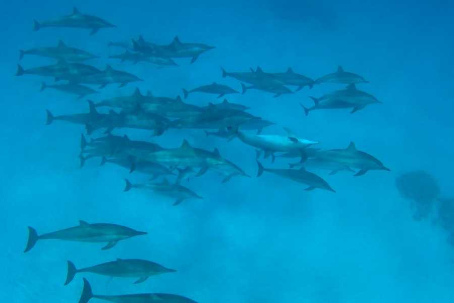 Marsa alam tours Overnight Snorkeling Trip At Satayh Dolphin Reef From Marsa Alam
