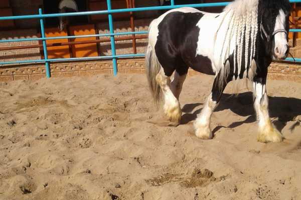 // Horse or Pony Riding