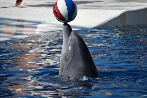// Dolphin Show & Aqua Park