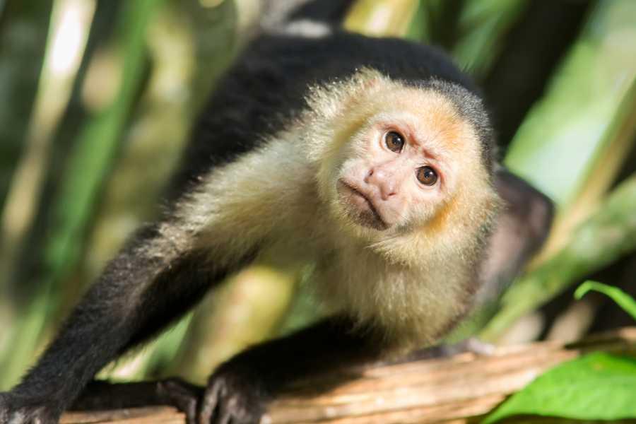 Congo Canopy Canopy Monkey Sanctuary Combo