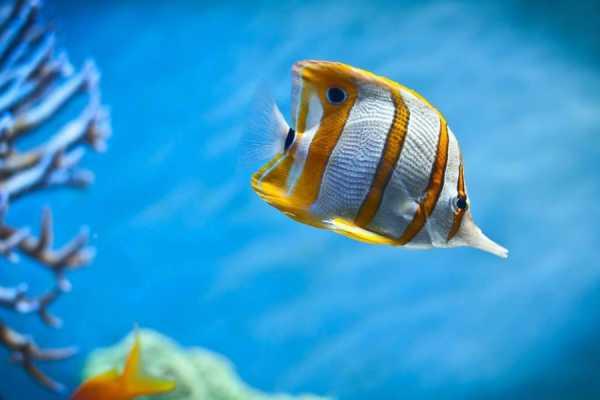 // Aquarium & Antalya City