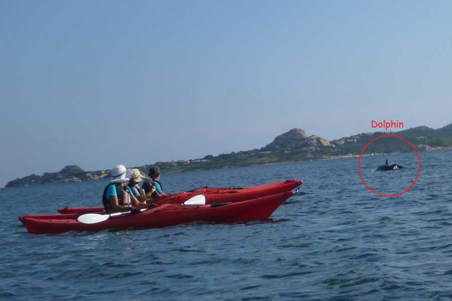 Sardinian Discovery Morning navigation experience - max 8 people from 18 years old