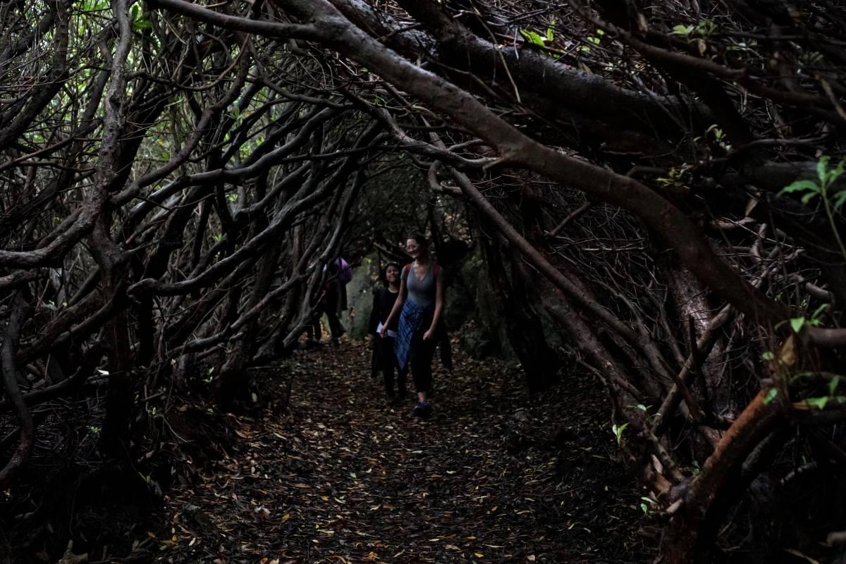 Shane's Howth Hikes Autumn Fall Safari Howth - September, October, November