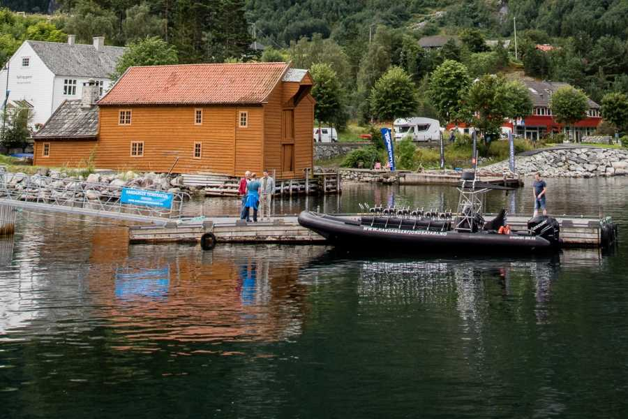 Hardanger Fjordsafari AS RIB tur 3+ timar