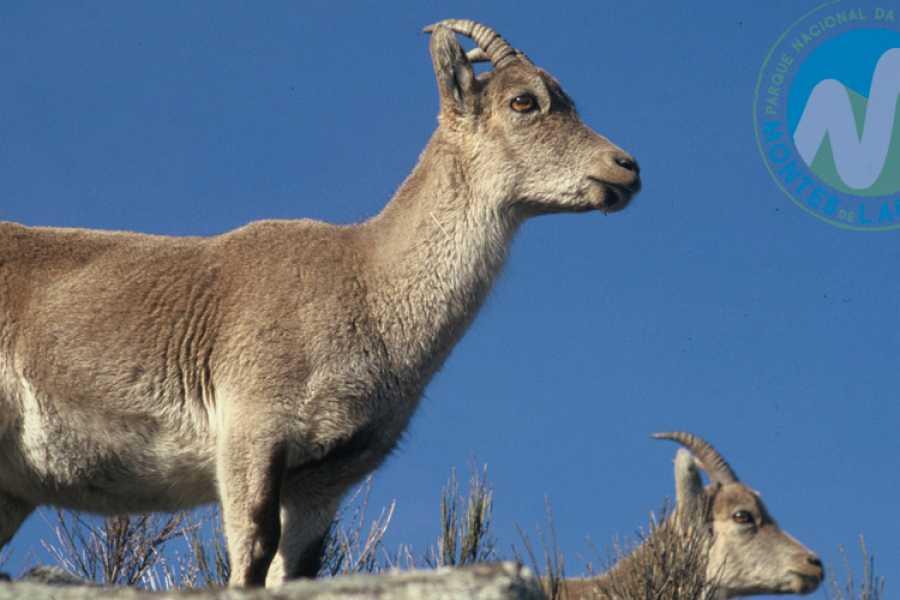 Gerês Holidays Tour na Pegada do Lobo Ibérico