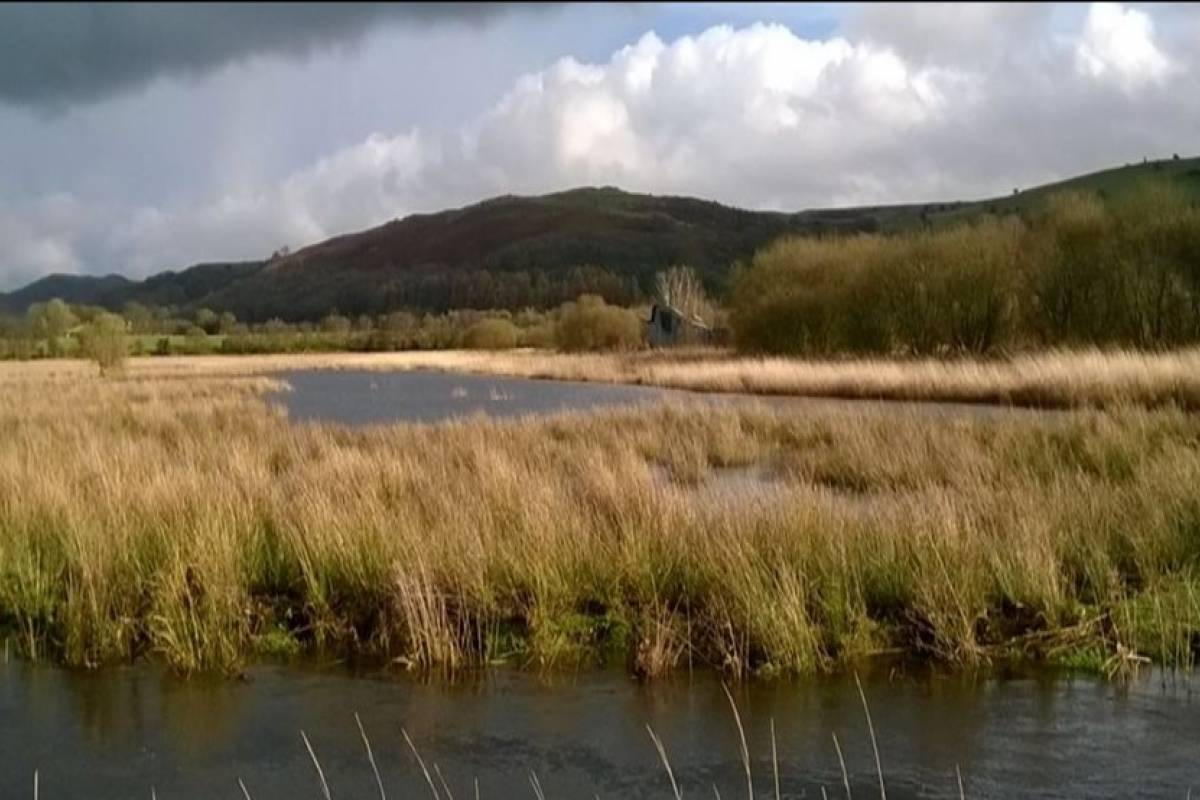 Cambria Tours Dyfi Biosphere with Iolo Williams Day Trip - Aberystwyth University