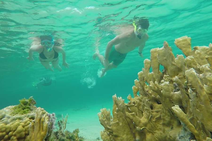 Eleuthera Adventure Tours Ltd. Dune Buggy and Snorkel Safari
