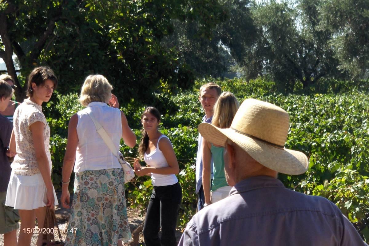 Posada Olivar Wine Tour Maipú