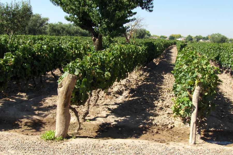 Posada Olivar Wine and Bed Tour Maipú