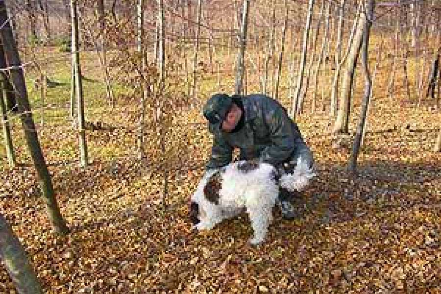 ACCORD Italy Smart Tours & Experiences TRUFFLE HUNTING IN TUSCANY - 6 hours PRIVATE TOURS