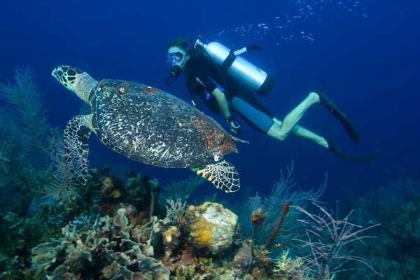 // Scuba Diving Belek
