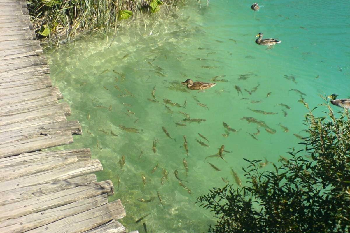 Sugaman Tours NP Plitvice Tour from Omis