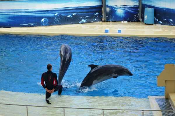 // Dolphin Show From Belek