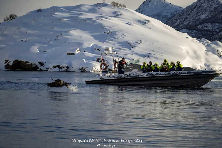 Lofoten Explorer AS Trollfjord- & havørnsafari